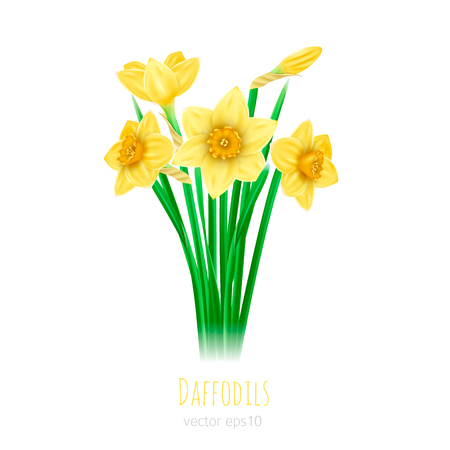 Bouquet of yellow daffodils on a white background. Photorealistic vector
