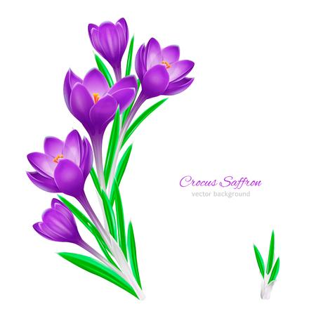Floral spring background for design on white background