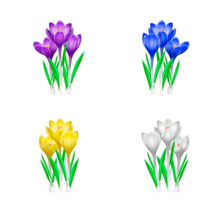 Blue, yellow, violet, white crocuses set isolated on white background. Spring flowers vector illustration. Imagens - 124091108