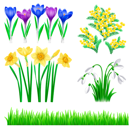 Flowers and grass collection of elements and decoration. Crocus, narcissus, mimosa, snowdrop vector illustration isolated on white background Imagens - 124026307