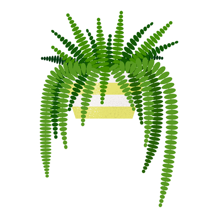 illustration of Nephrolepis exaltata home plant isolated Ilustração