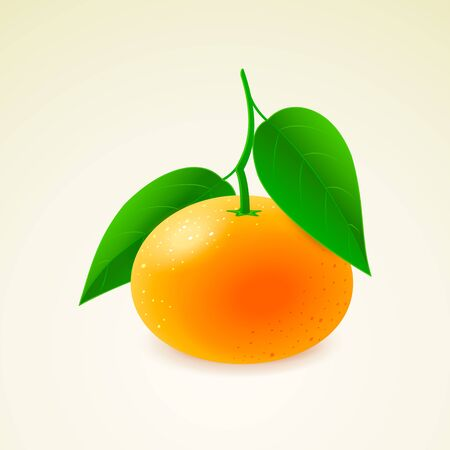 Tangerine with leaves isolated on background detailed vector illustration