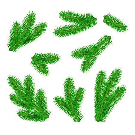 Set of green detailed fir branches. Vector Christmas tree, pine.