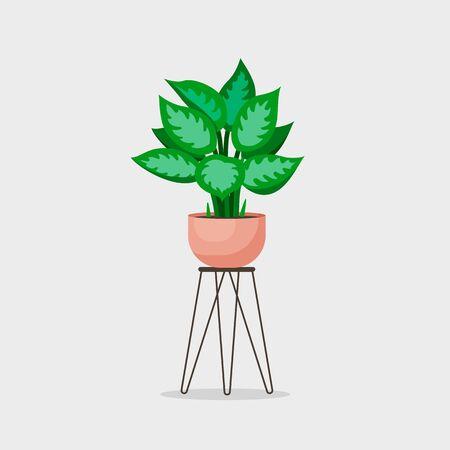 Vector cinese evergreen home plant illustration