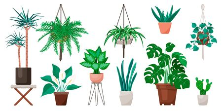 Popular indoor plants on white background