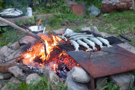 Cooking Fish on a Campfire