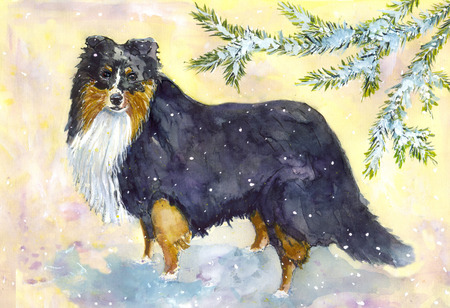 sheepdog: Shetland Sheepdog watercolorwinter landscape and dog breed sheltie Stock Photo