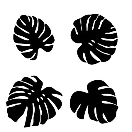 Set of black monstera leaves in beautiful style on white background. Element decorative floral. Tropical decoration plant leaf silhouette. Isolated vector design. Botanical drawing. White background