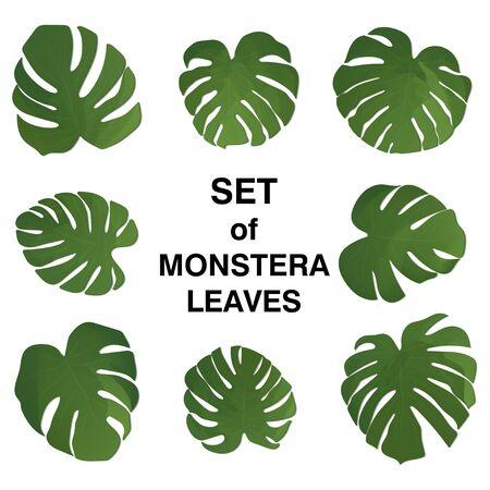 Monstera leaf. Set of paradise leaves on white background. Vector illustration. Summer floral design. Botanical art. Natural card design. Set with green monstera leaves. Tropical illustration. Ilustração
