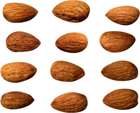 Realistic almond on white background. Organic nutrition healthy food. Isolated vector illustration with almonds. Top view. Vector set. Organic ingredient. Natural realistic illustration
