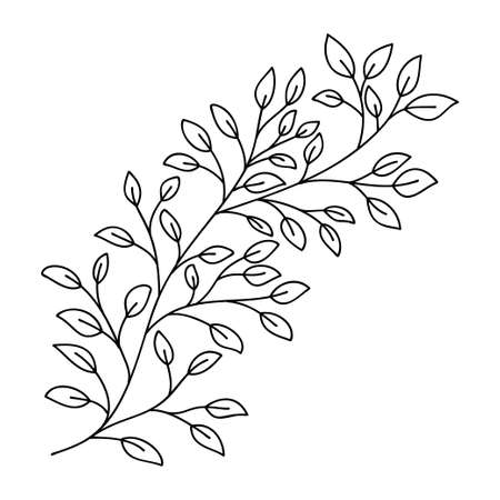 Hand drawn leaves and branch isolated on white. Doodle birch leaves for design. Vector illustration. Botanical print. Organic natural shape. Isolated birch branch