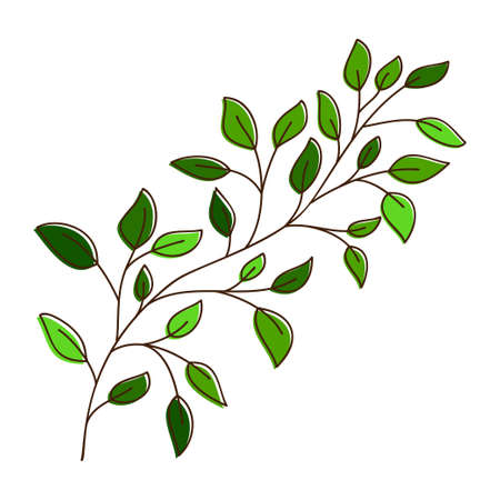 Vector of a birch tree branch. Hand drawn leaves and branch isolated on white. Doodle birch leaves for design. Vector illustration. Botanical print. Organic natural shape 矢量图像