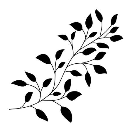 Hand drawn leaves and branch isolated silhouette on white. Doodle birch leaves for design. Vector illustration. Botanical print. Organic natural shape. Isolated birch branch