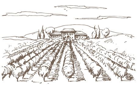 Vineyard: Dibujado a mano ilustración de un viñedo. Vectores