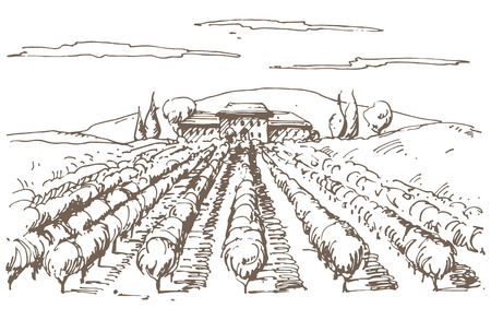 wine label: Hand drawn illustration of a vineyard.  Illustration