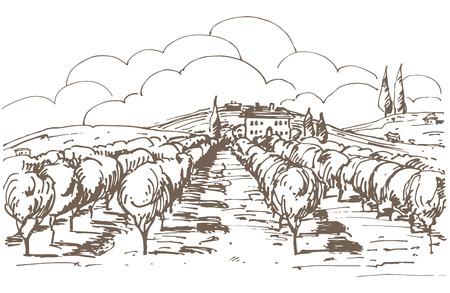 Hand getrokken illustratie van een wijngaard. Stock Illustratie