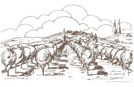 Hand drawn illustration of a vineyard.   Illustration