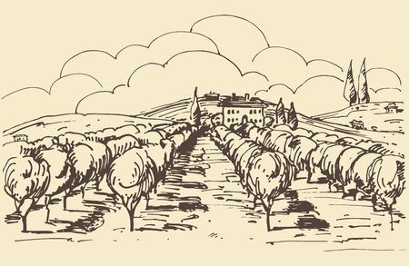 tuscany vineyard: Hand drawn illustration of a vineyard.  Illustration