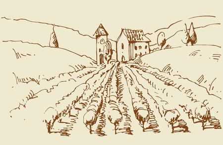 cottage garden: Hand drawn illustration of a vineyard.   Illustration