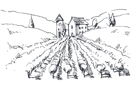 Hand drawn illustration of a vineyard  Vector
