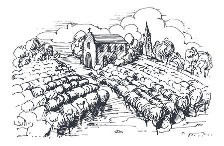 house drawing: Hand drawn illustration of a vineyard.  Illustration