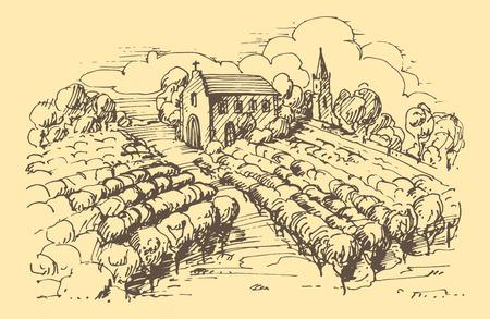 Hand drawn illustration of a vineyard.   矢量图像