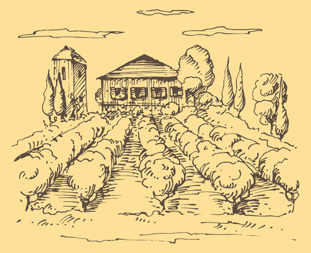 Hand drawn illustration of a vineyard.
