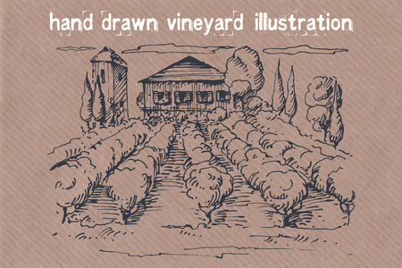 cottage garden: Hand drawn illustration of a vineyard. EPS 10. No transparency. No gradients.