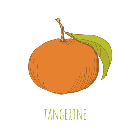 unpeeled: Hand drawn illustration of tangerine. EPS 10. No transparency. No gradients. Illustration