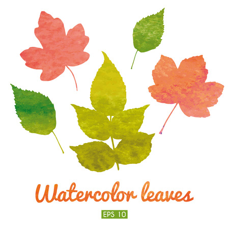 Watercolor set of autumn leaves.   Vector