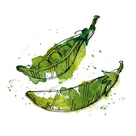 Watercolor illustration of peas.
