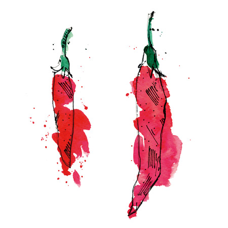 hot spot: Watercolor illustration of peppers.  Illustration