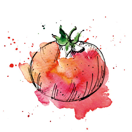 Watercolor illustration of tomato.  Illustration