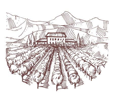 tuscany vineyard: Hand drawn illustration of a vineyard Illustration