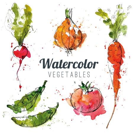 marchew: Zestaw warzyw akwarela Ilustracja
