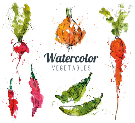 summer vegetable: Set of watercolor vegetables