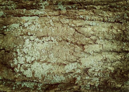 Old wood texture with scratches and cracks and moss Stock Photo