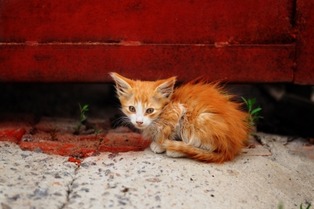 red homeless kitten sitting in the grass at the Iron Door photo