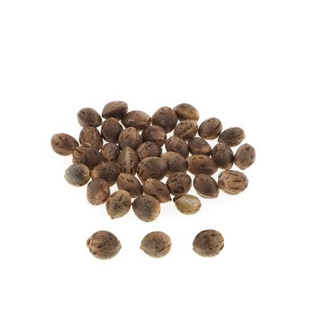 Hemp seeds isolated on white background.