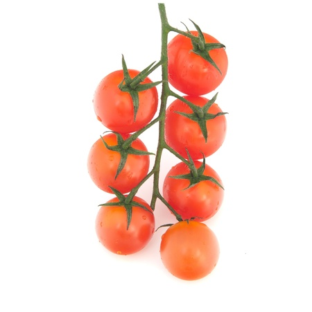 isolated branch of cherry tomatoes