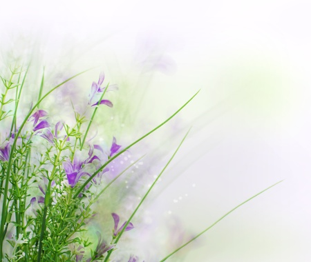 Beautiful spring flower background  Stock Photo