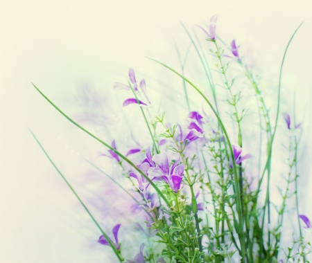 flowers bokeh: Beautiful spring flower background  Stock Photo
