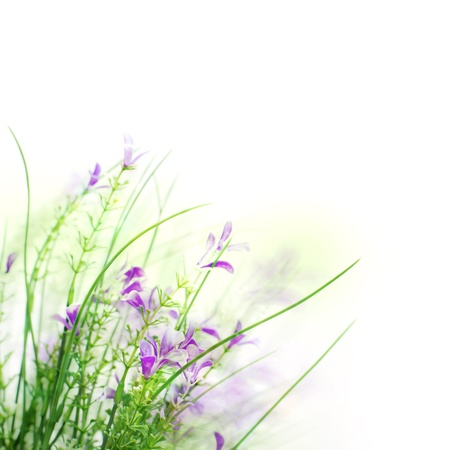 wild botany: Beautiful spring flower background with white copy space  Stock Photo