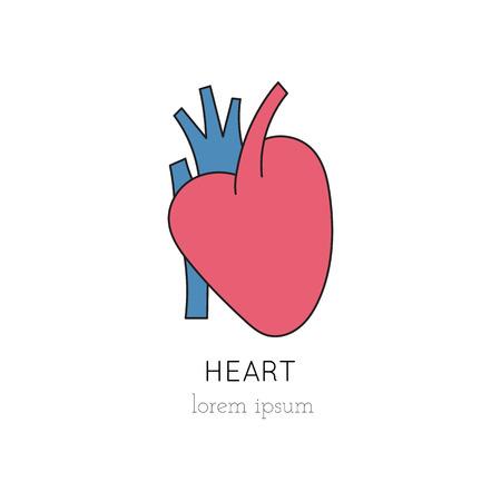 donacion de organos: Vector heart thin line icon, logo template illustration. Part of Organ Donation set. Colored pictogram, healthcare medicine isolated symbol. Simple mono linear modern design.