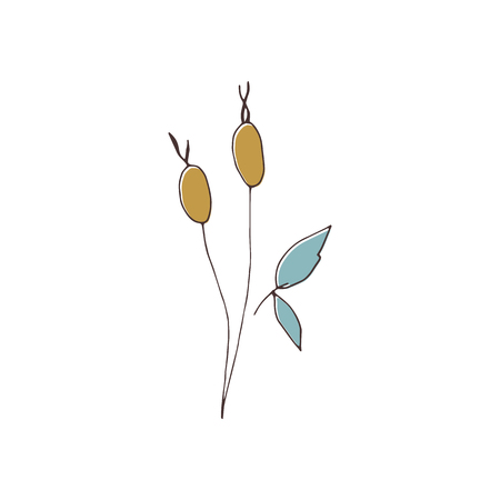 Vector hand drawn isolated floral elements, branches with berries. Simple modern design, scandinavian style. For holiday cards, decorations, templates. Part of a large winter collection. Illustration
