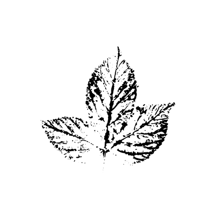 Vector leaf imprint
