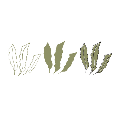 Vector hand drawn seaweeds. Isolated individual objects, algae. Sea clipart for greeting cards, weddings, stationery, surface design, scrapbooking. Part of a large sea collection. 일러스트