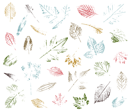 Set of leaf imprints, natural textures. Autumn foliage, vector colored illustration. Isolated elements for decorative floral design, vintage background. 일러스트