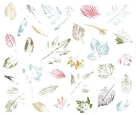 Set of leaf imprints, natural textures. Autumn foliage, vector colored illustration. Isolated elements for decorative floral design, vintage background. Illustration