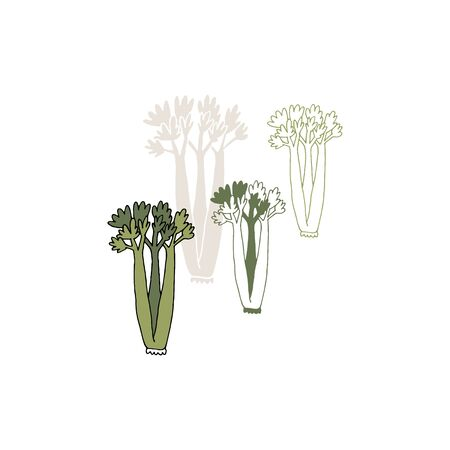 Vector hand drawn vegetables, celery. Healthy nutrition.